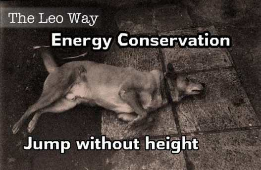 m_The Leo Way Energy Con jump Without height b
